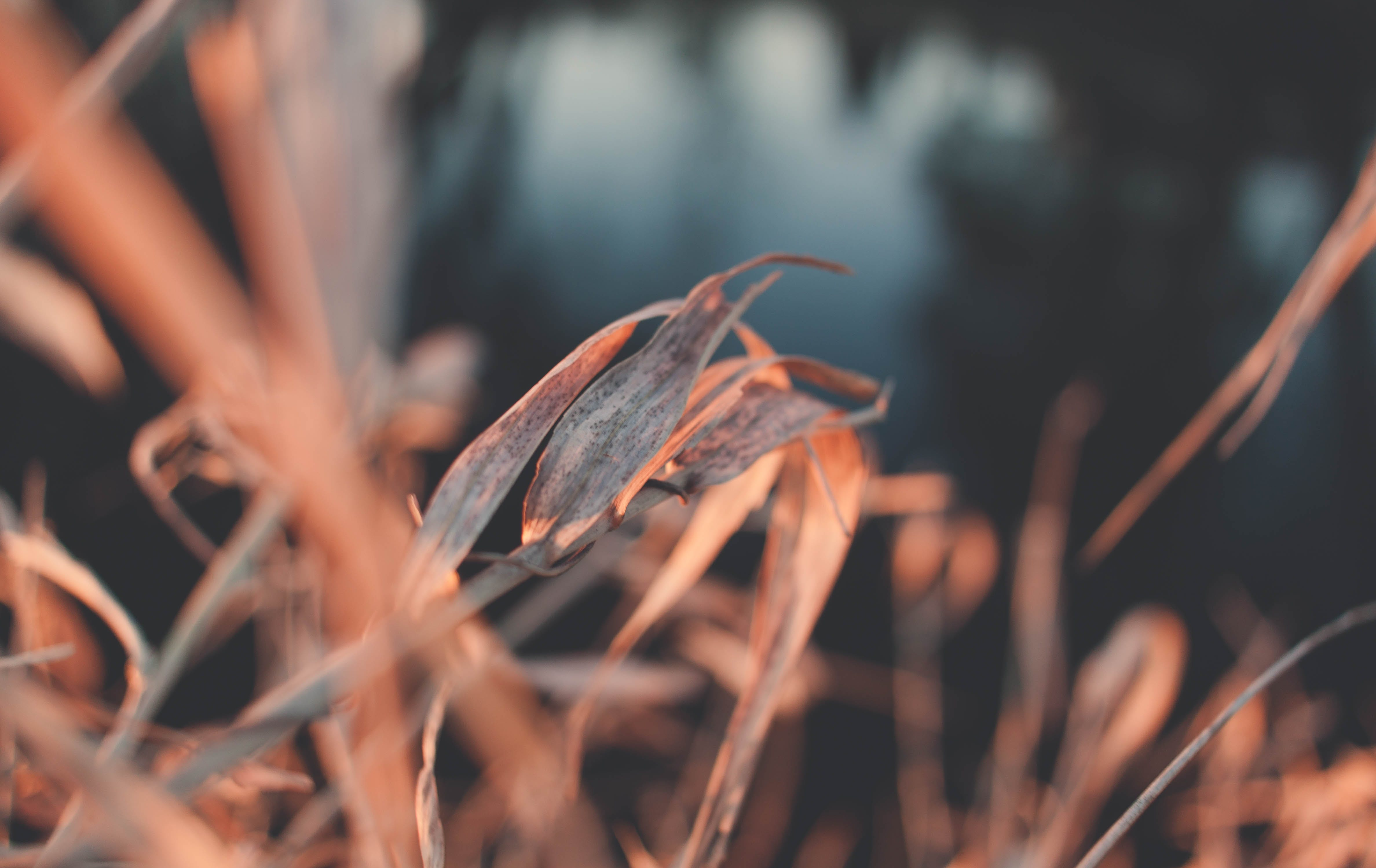 Close-up Photography of Brown-leafed Plant