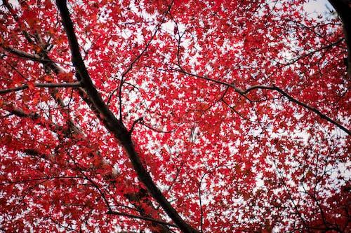 Foto profissional grátis de árvore, aumento, brilhante, cores