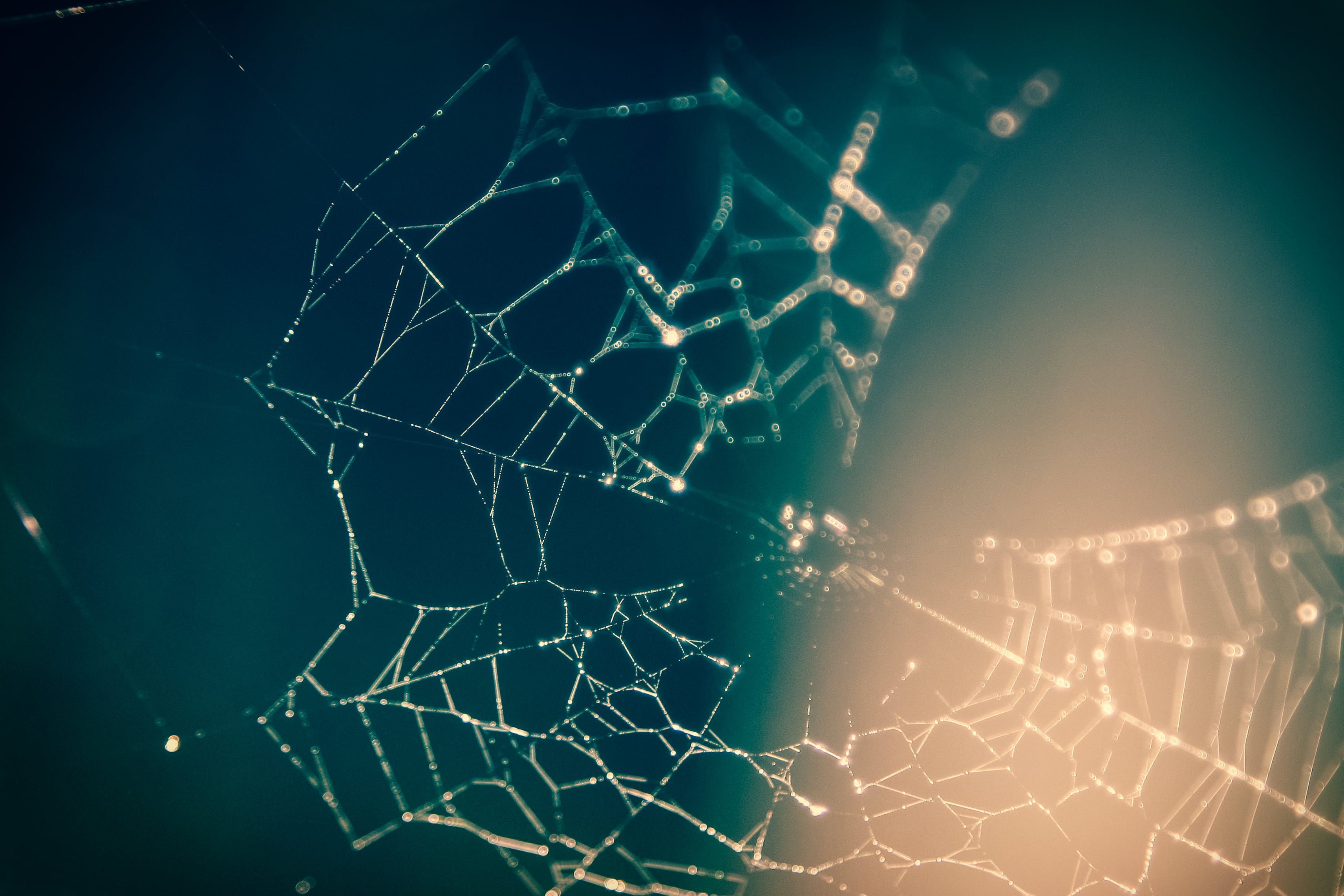 Close Up Photography of Spider Web