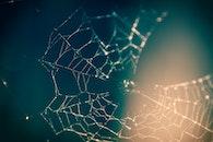 blur, macro, cobweb