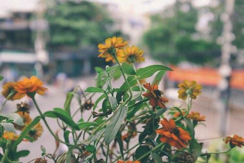 Photos gratuites de balcon, cactus, café, coffee shop