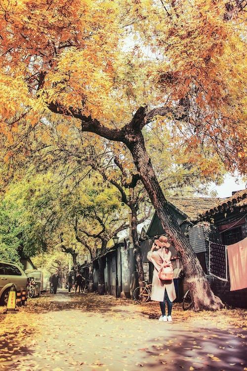 Ingyenes stockfotó 北 锣鼓 巷, 北京, 季节, 房屋 témában
