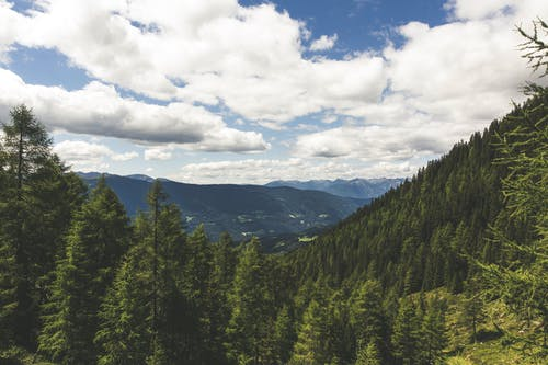 Free stock photo of clouds, cloudy, conifers, evergreen