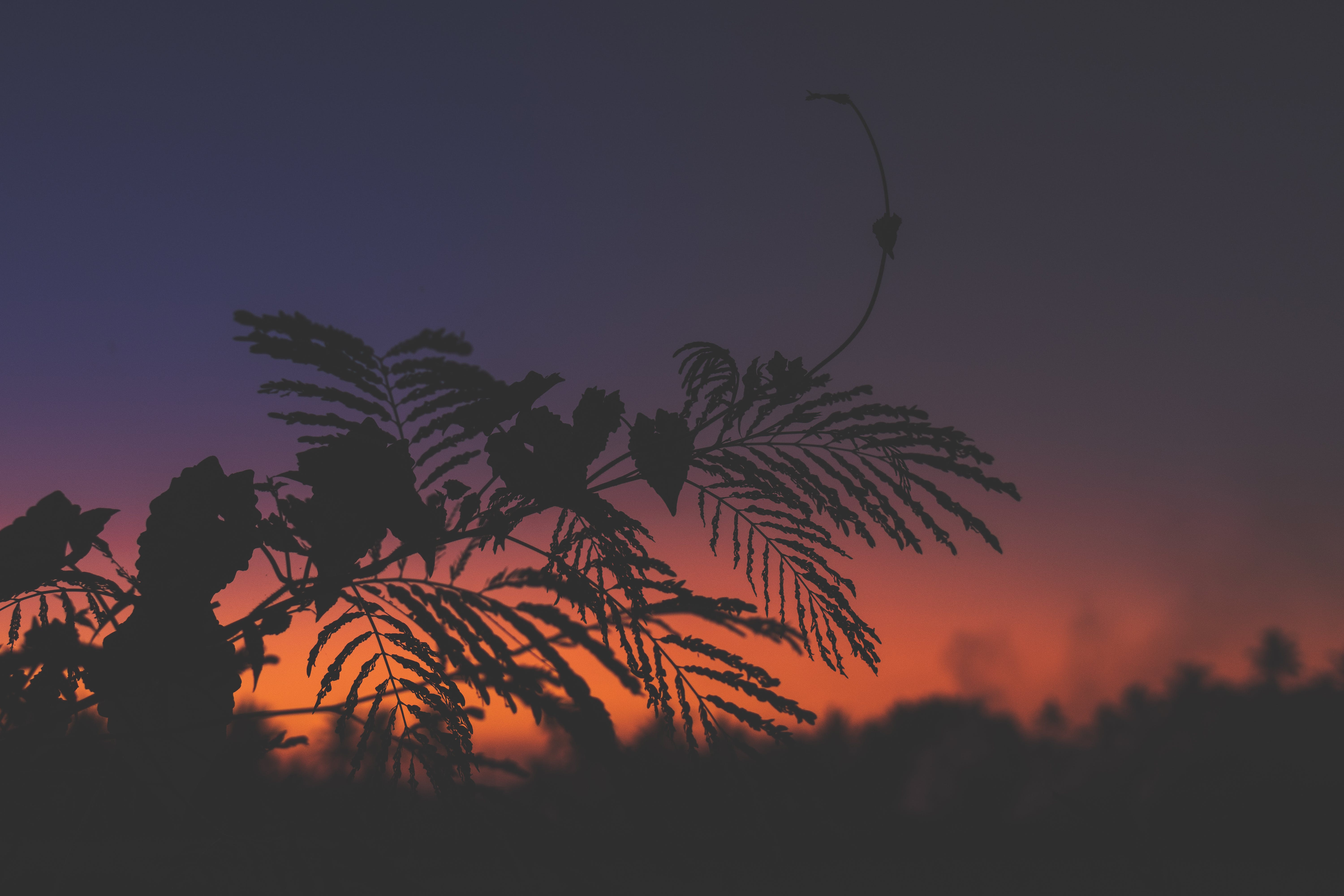 Silhouette of Plants during Dawn