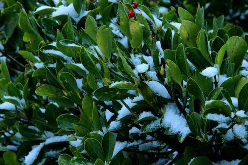 Ingyenes stockfotó ágazat - növényi rész, bokor, buja lombozat, erdő témában