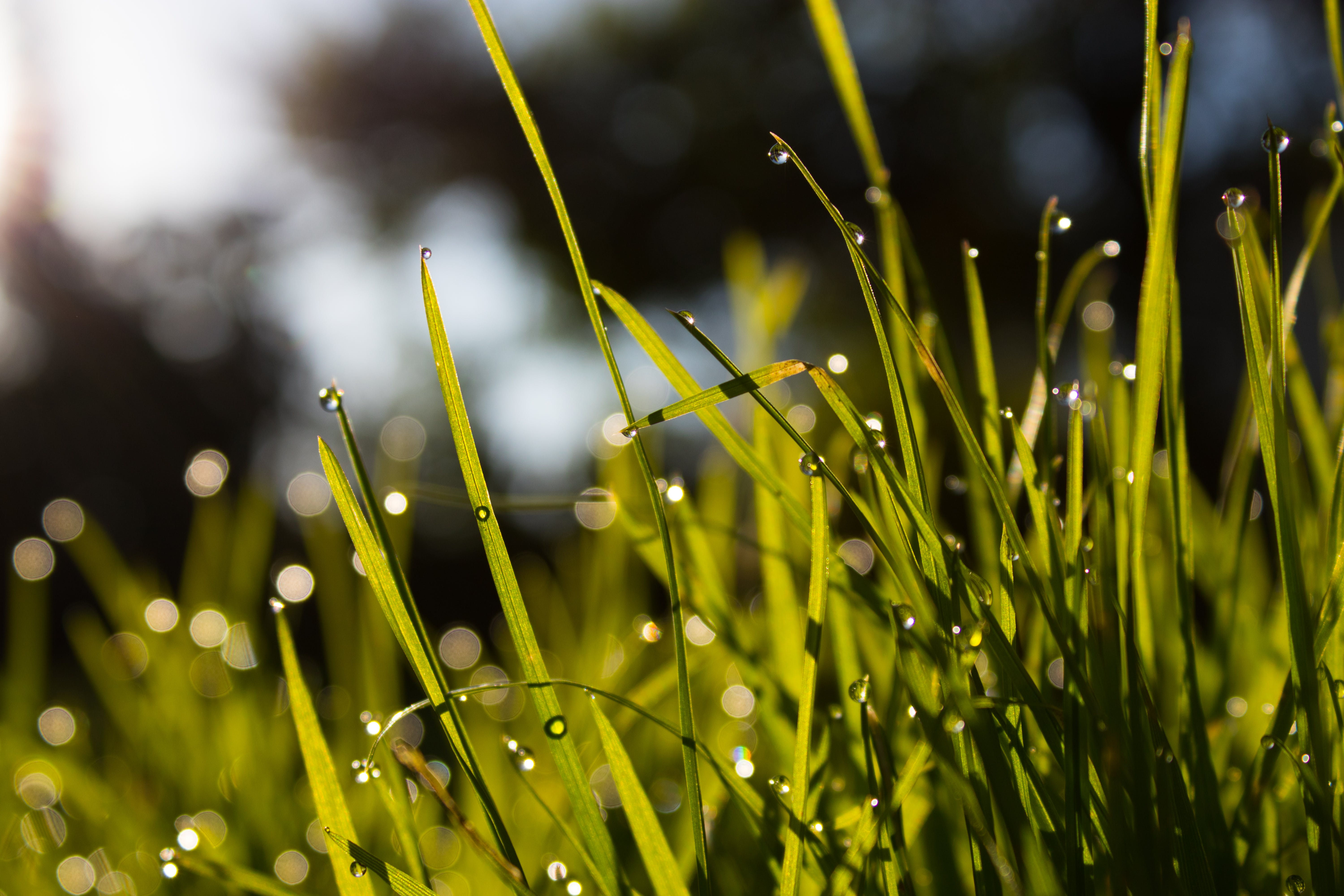 Close-up Photo of Water Dew on Green Grass