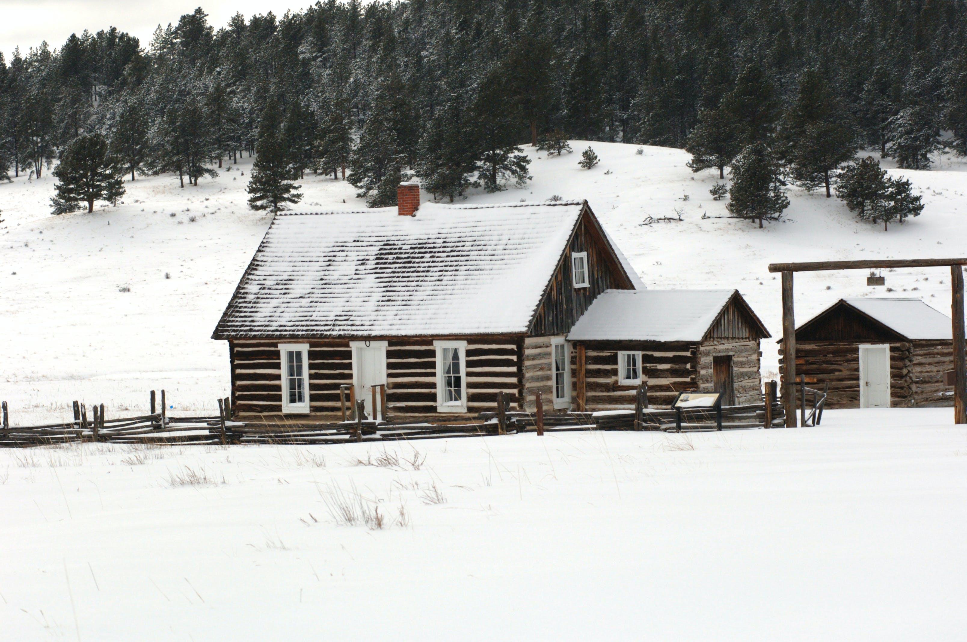 de arbres, bungalou, cabana, constipat
