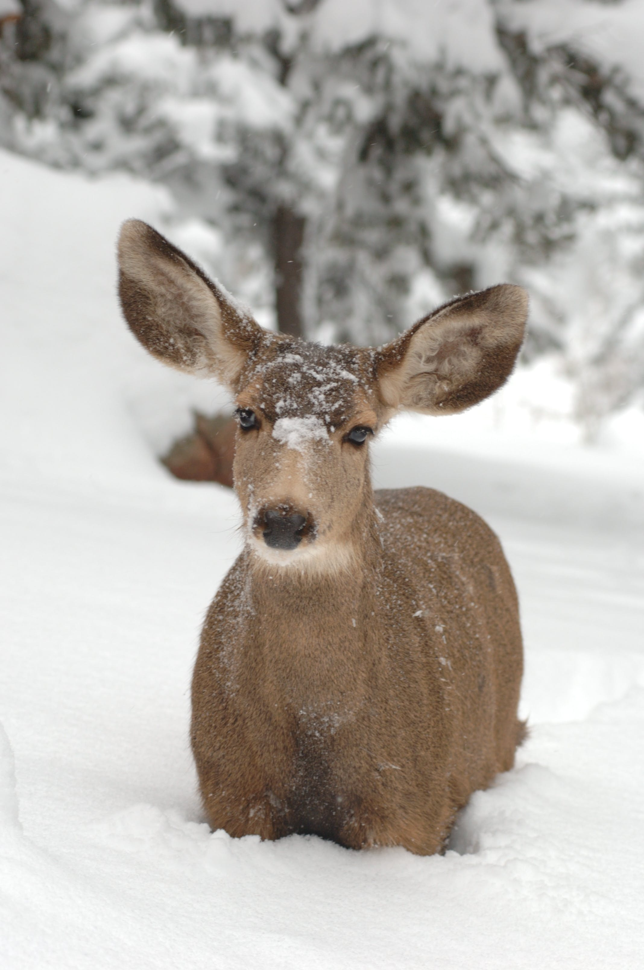 Deer On Snow Field