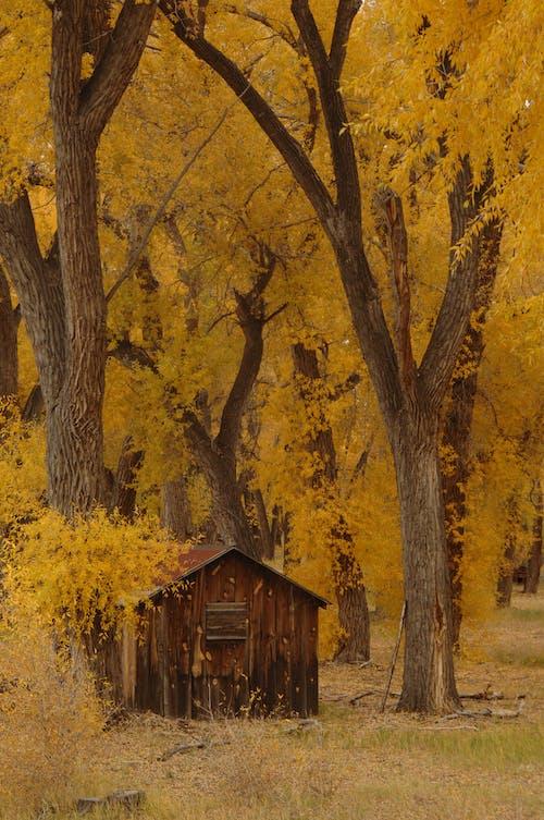 Fotobanka sbezplatnými fotkami na tému dedinský, exteriéry, jeseň, jesenné farby