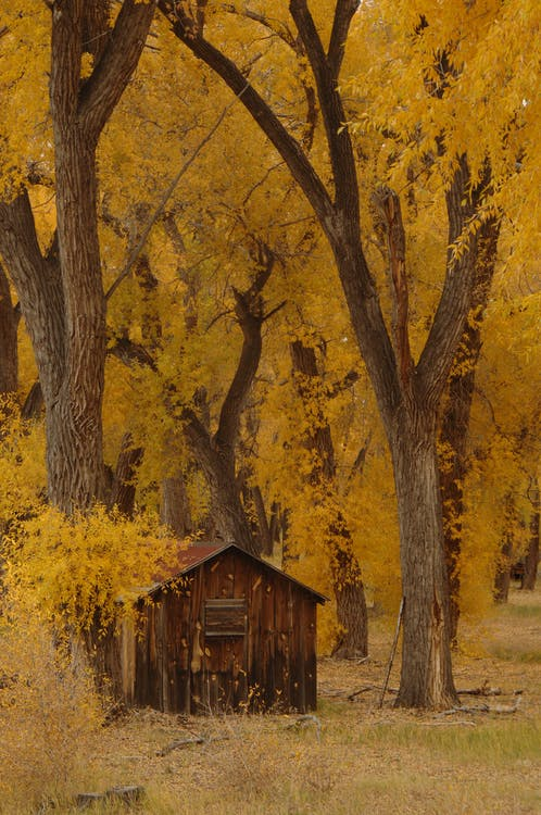 anotimp, arbori, codru