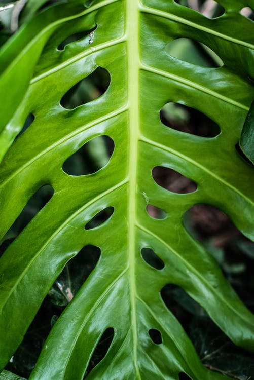 Close-UP Photo of Green Leaves