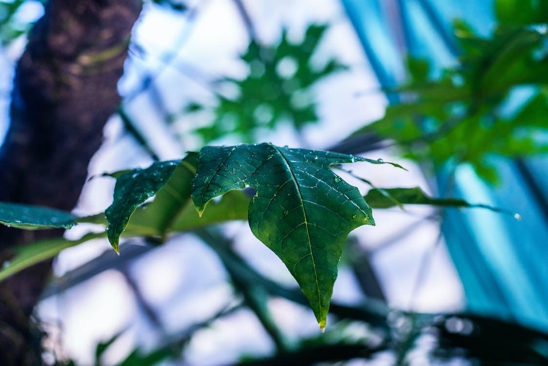 flora, green, mother nature