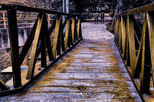 ağaçlar, ahşap köprü, erkek çocuklar, karanlık içeren Ücretsiz stok fotoğraf