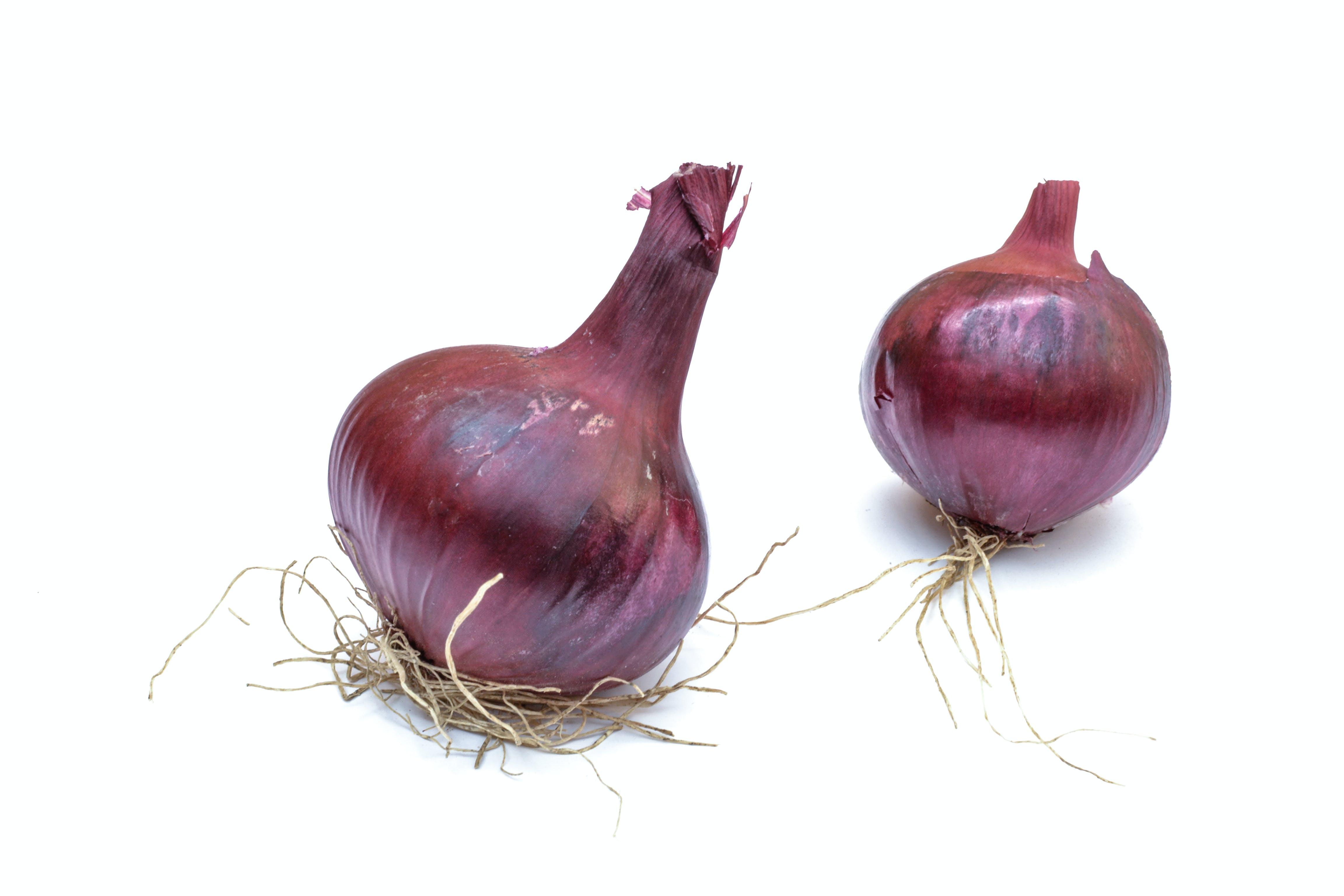 Free stock photo of onion, white background
