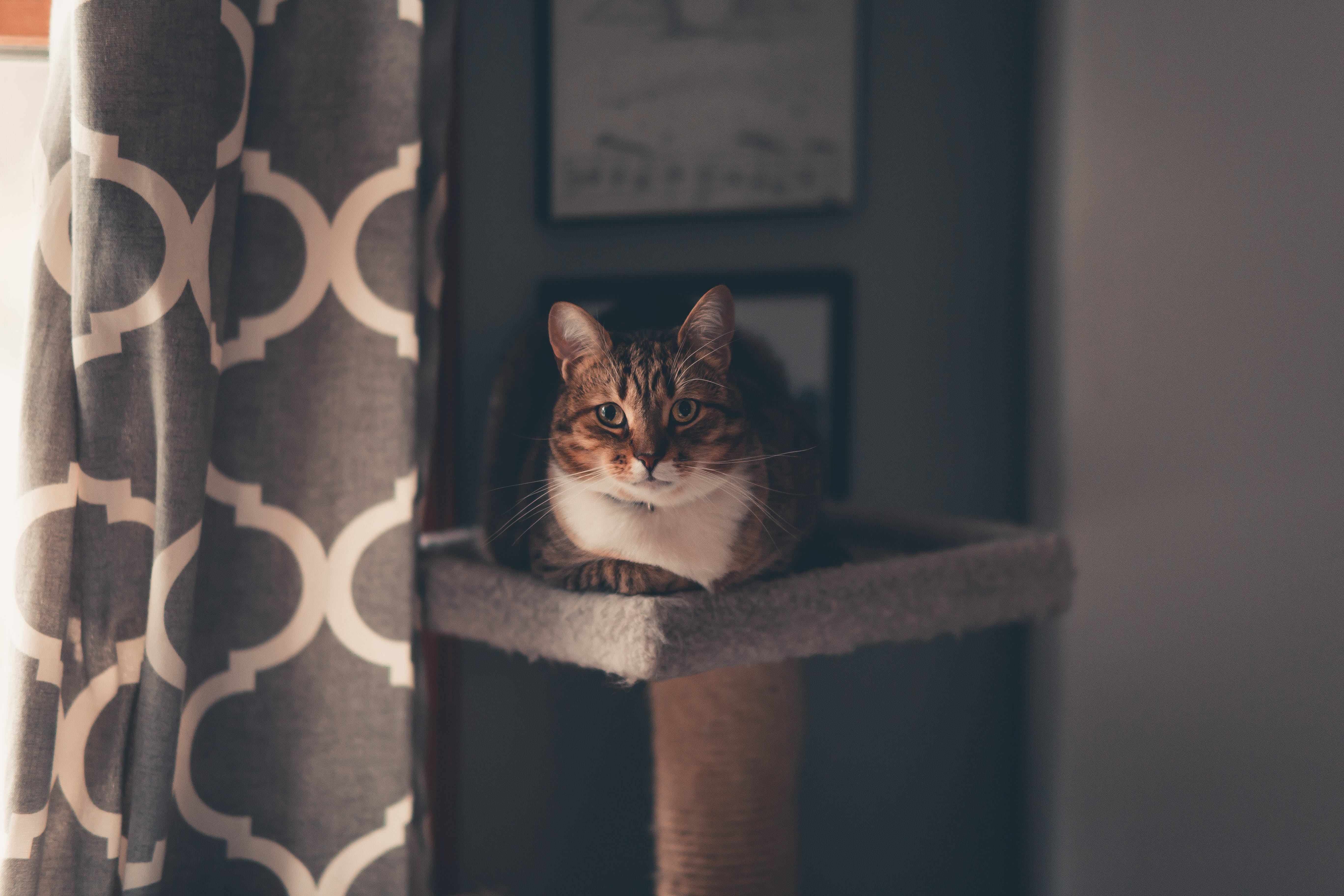 Brown Tabby Cat Sitting on Cat Tree