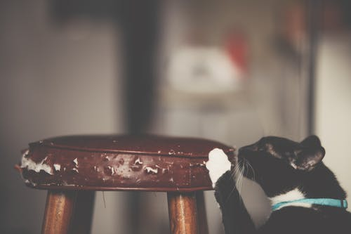 Close-Up Photo of Cat Scratching The Stool