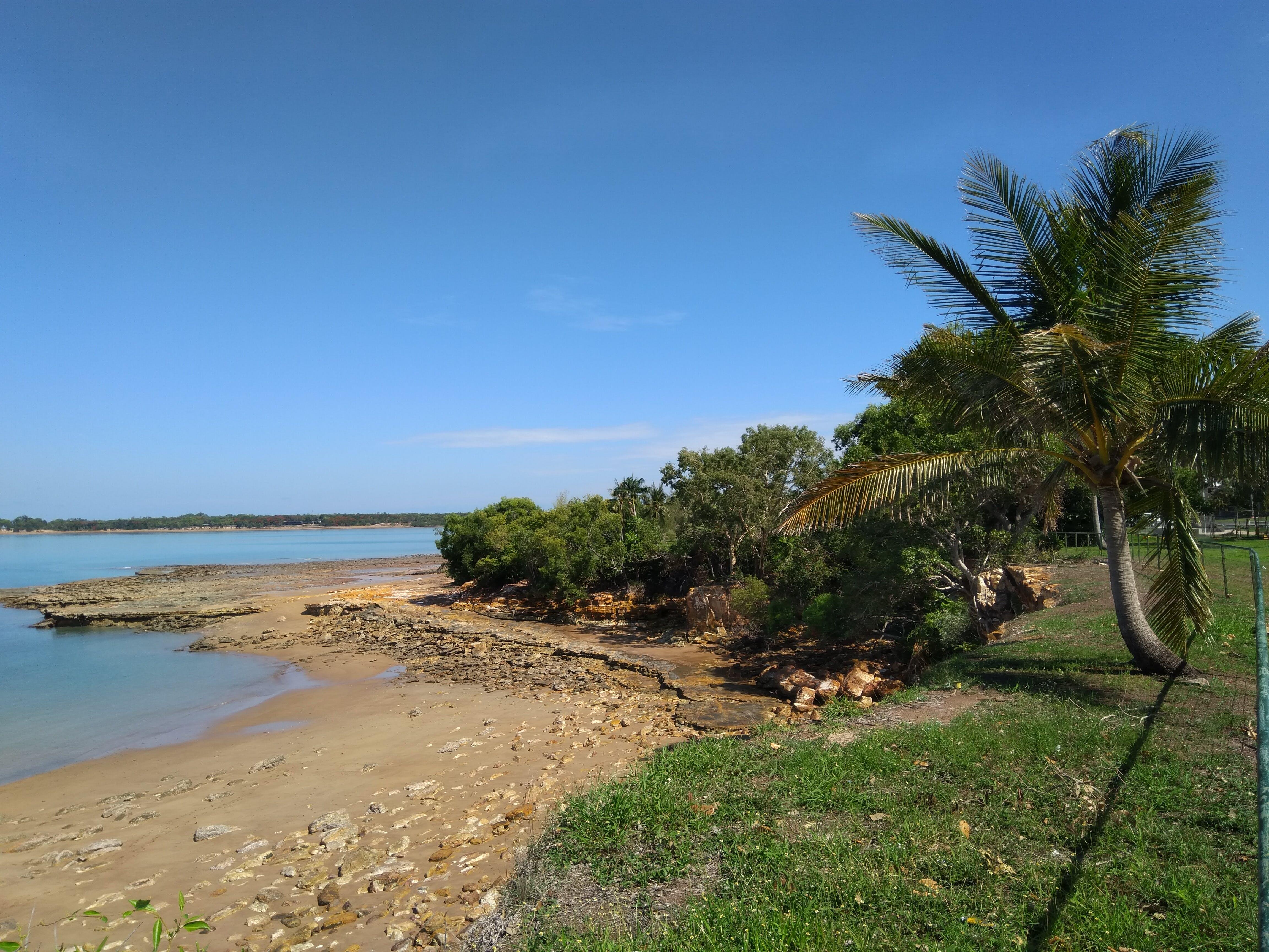 Free stock photo of beach, palm, tropics