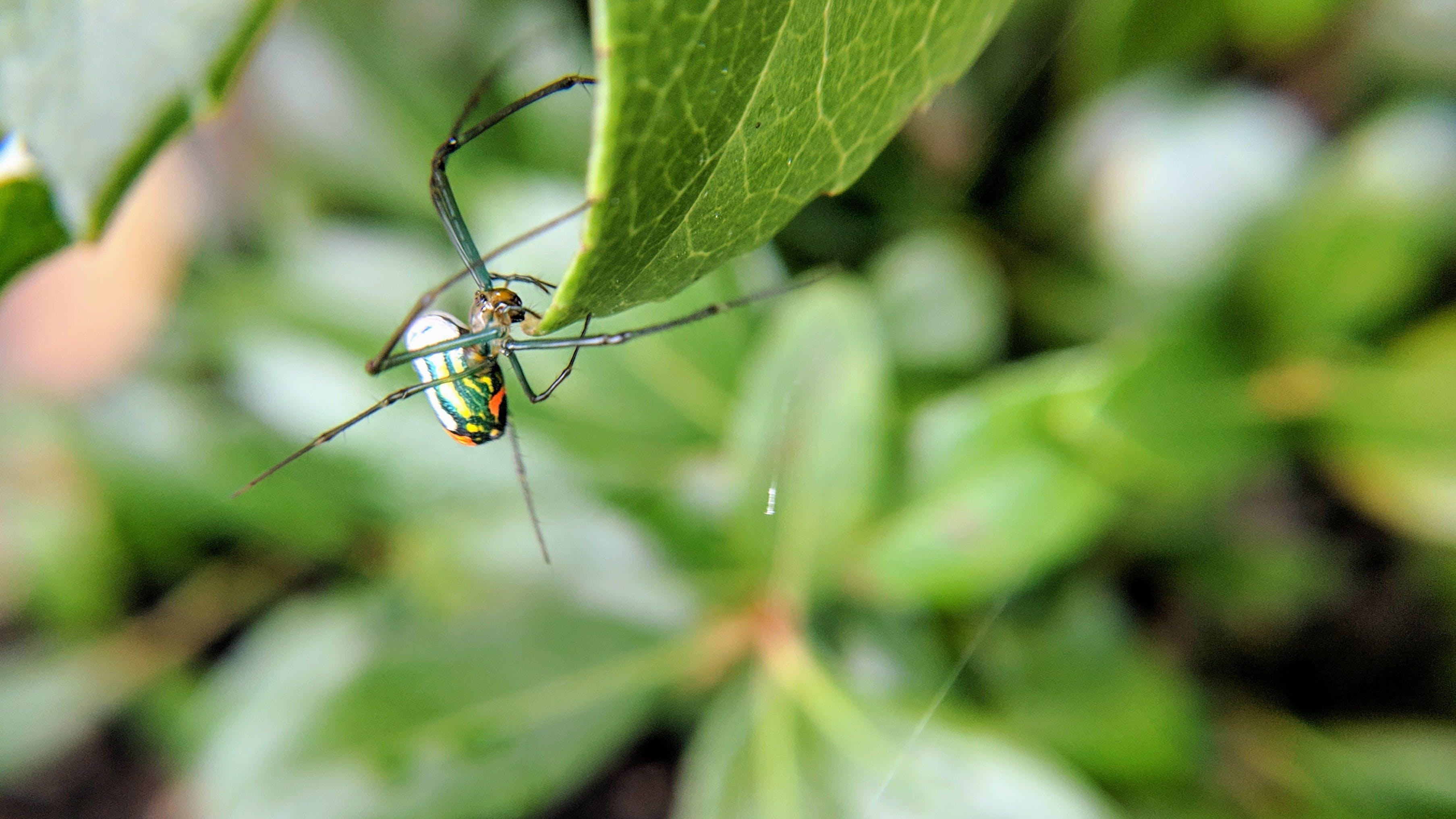 Free stock photo of arachnid, bug, bugs, close up