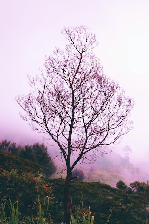 Darmowe zdjęcie z galerii z gałęzie, natura, podświetlony, sam drzewo