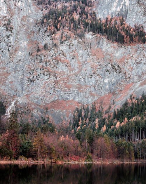 Безкоштовне стокове фото на тему «водойма, гори, Денне світло, дерева»