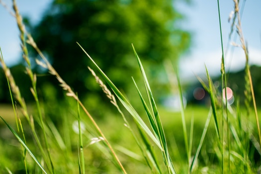 Green Grass during Daytime in Focus Photography