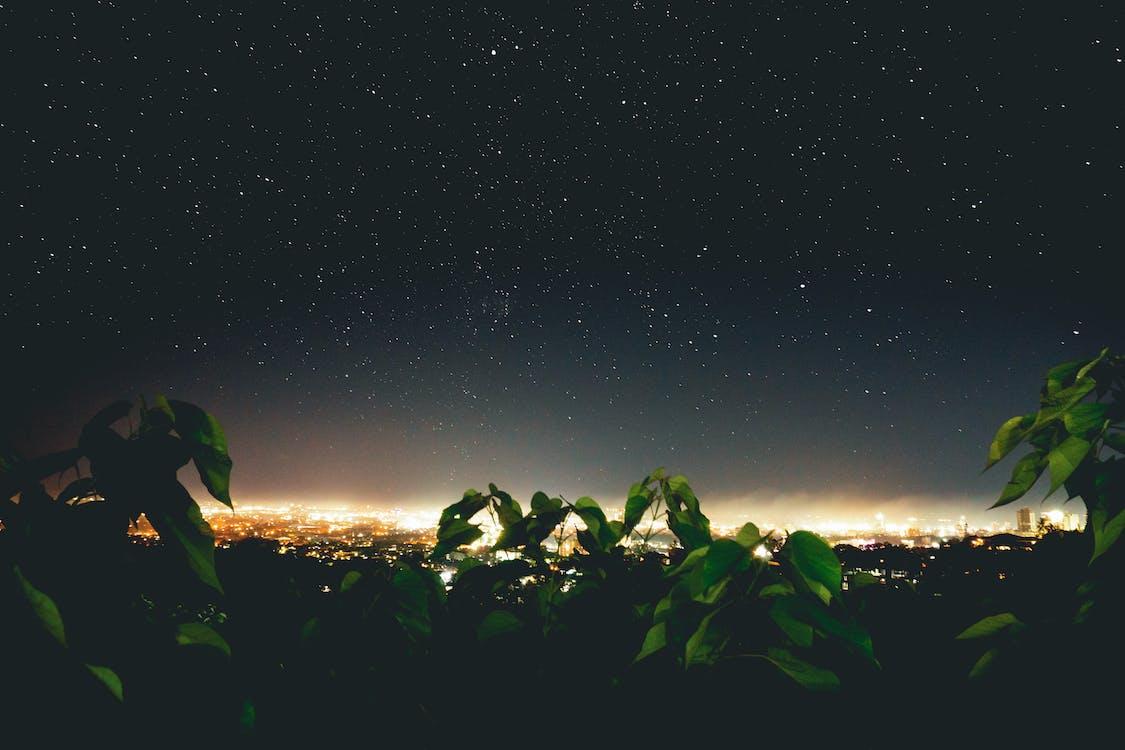 avond, beroemdheden, donker