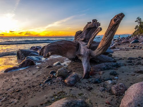 Driftwood On Seashore During Golden Hour