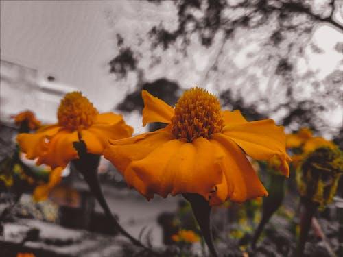 bahçe çiçeği, bulanık, bulanık arka plan, çiçek içeren Ücretsiz stok fotoğraf