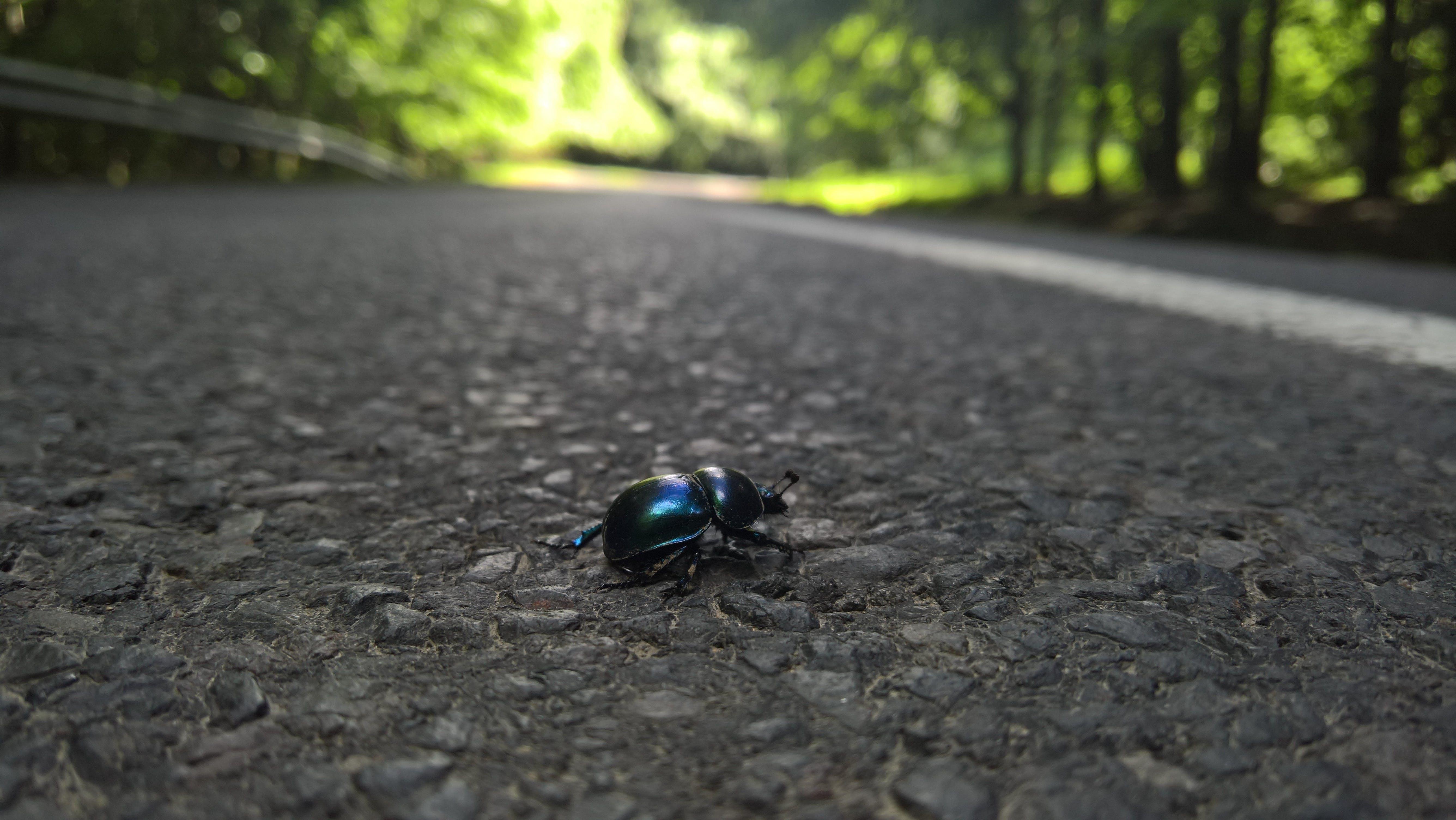 Free stock photo of beetle