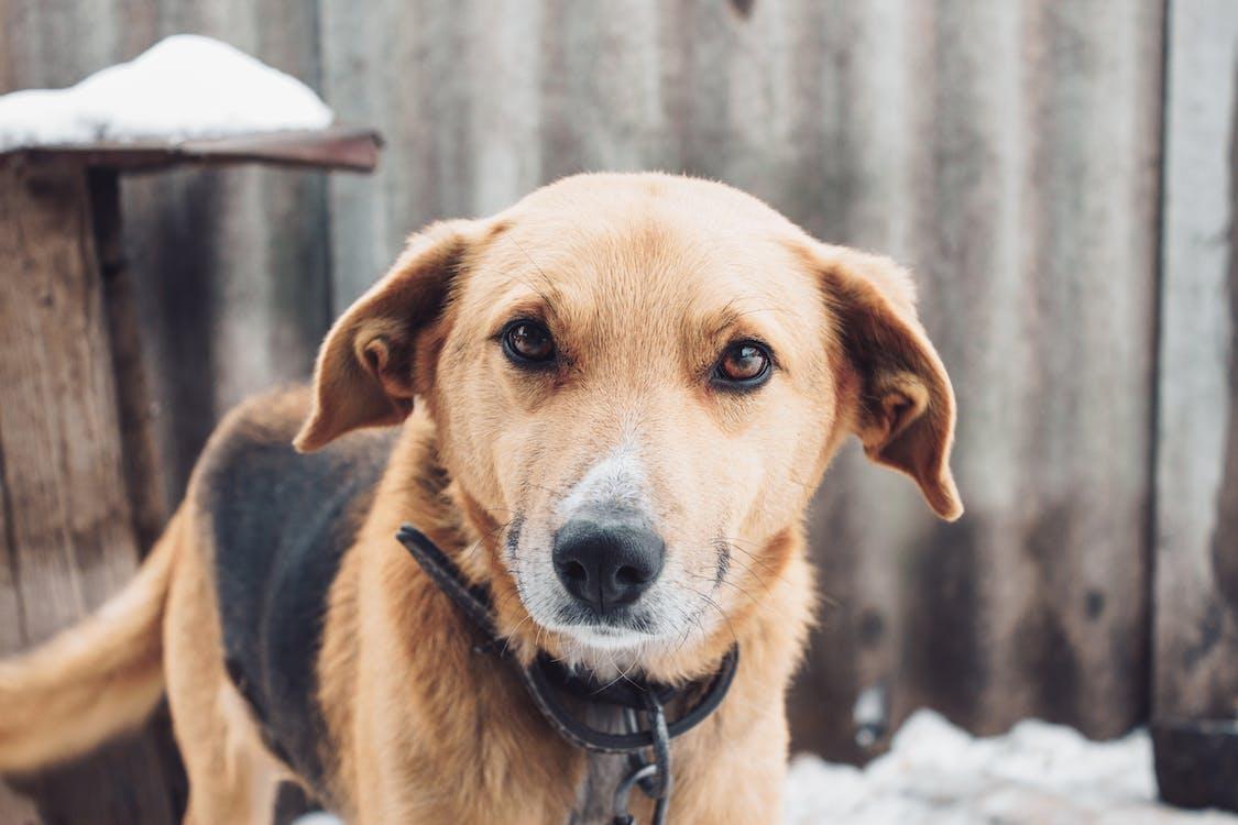 Short-coated Tan and Black Dog Near Gray Sheet Iron Close-up Photo