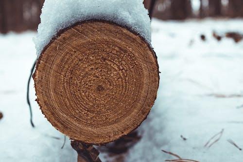 Immagine gratuita di conifera, crepa, grezzo, in legno