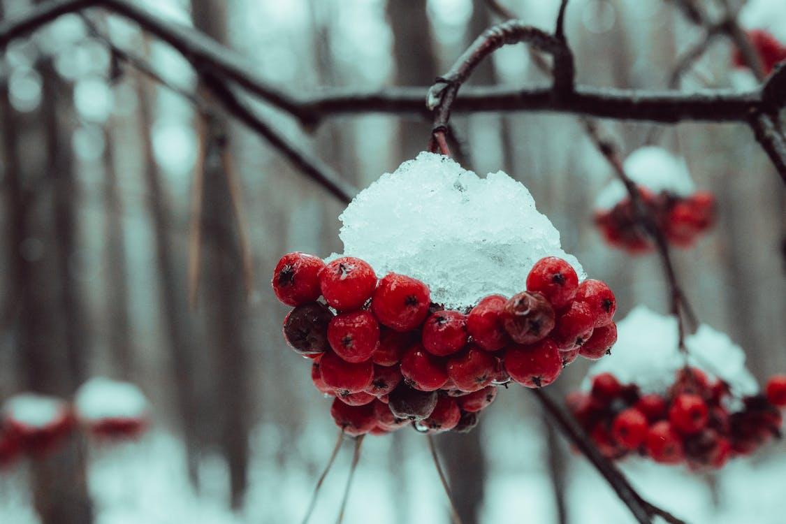 가지, 겨울, 과일