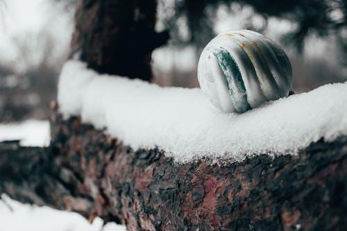 Fotos de stock gratuitas de abeto, árbol, árbol de Navidad, bola