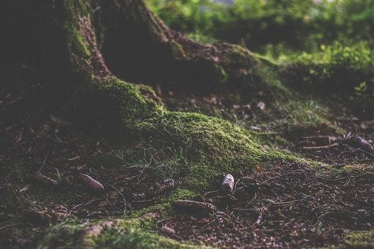 Free stock photo of landscape, nature, moss, tree