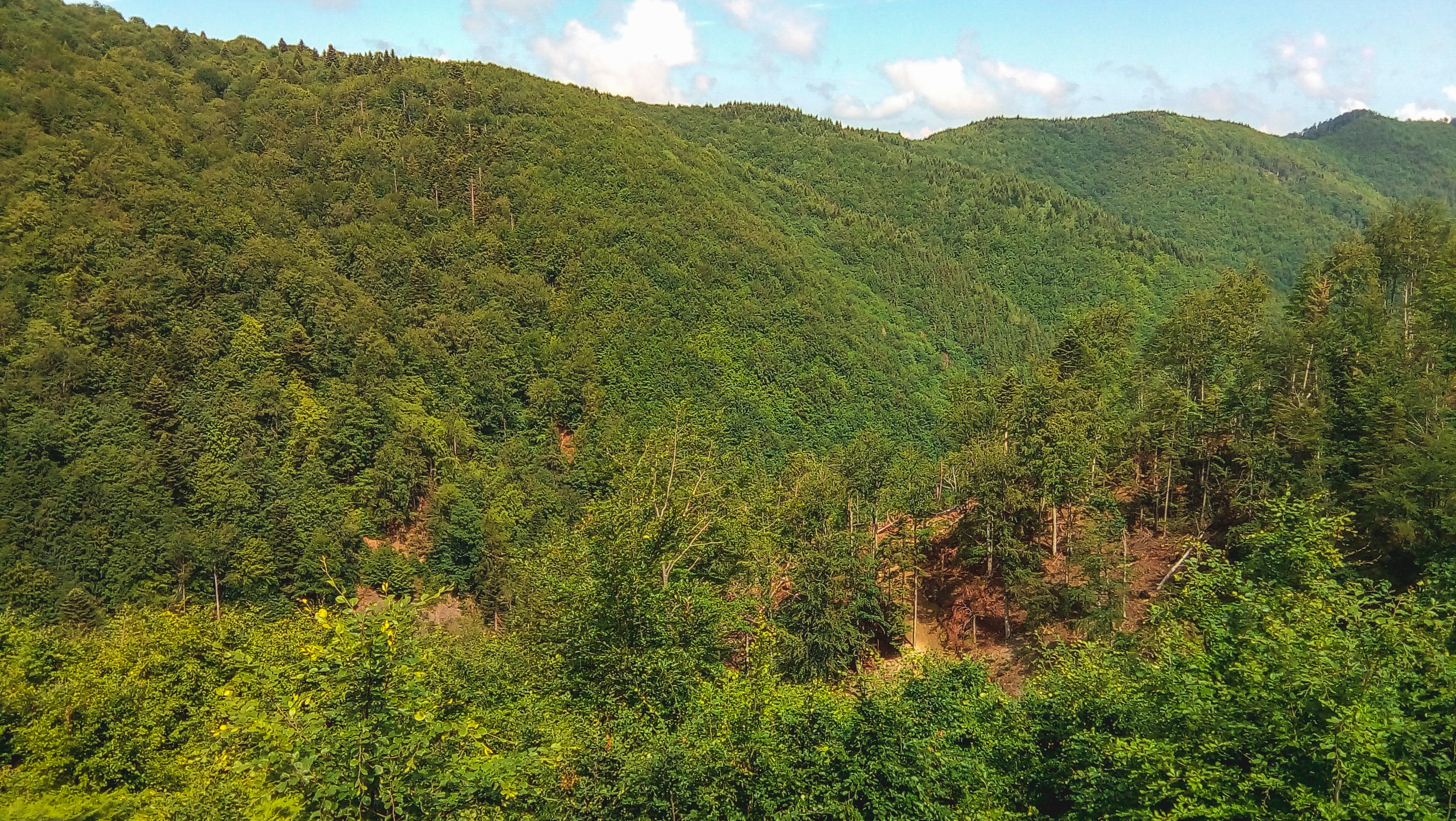 Free stock photo of forest cover, mountain, trees