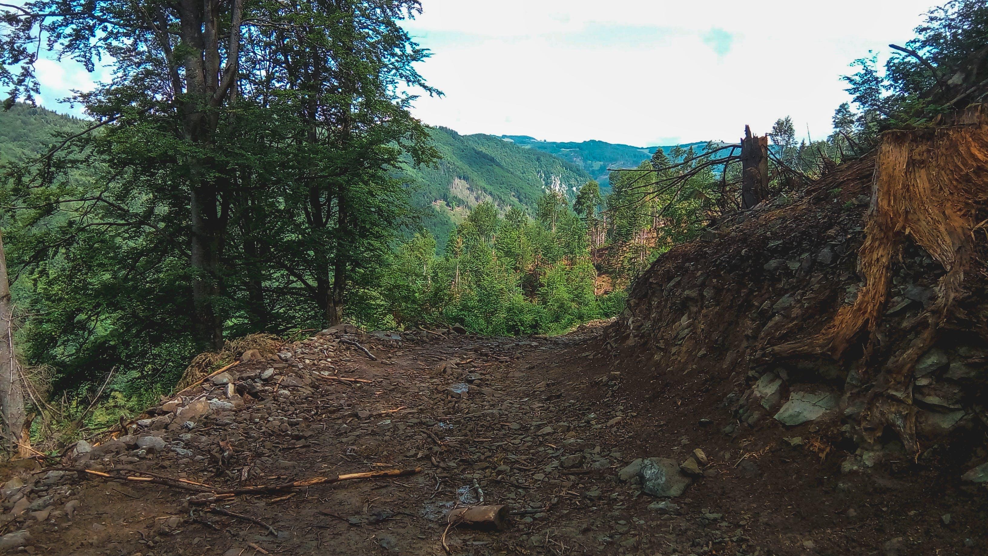 Free stock photo of forest, mountain, three, trees