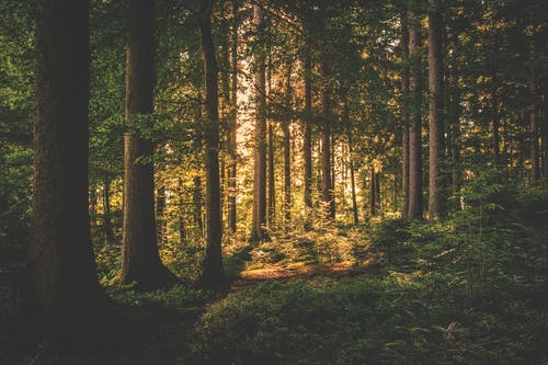 Grüne Laubbäume Auf Wald