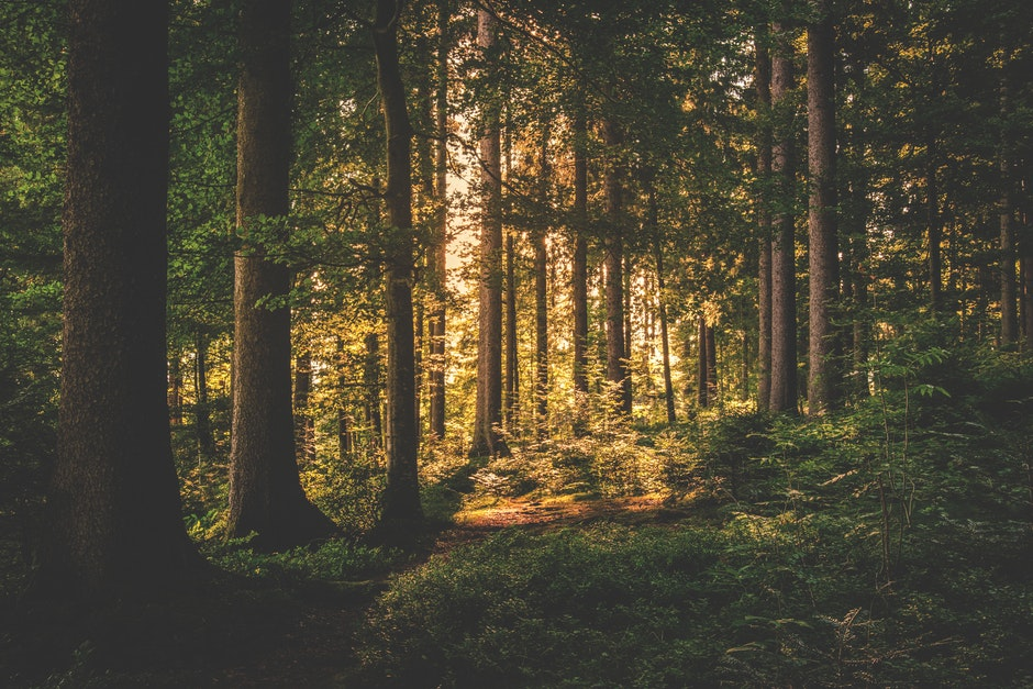 Green Light Auto >> Green Leaf Trees on Forest · Free Stock Photo