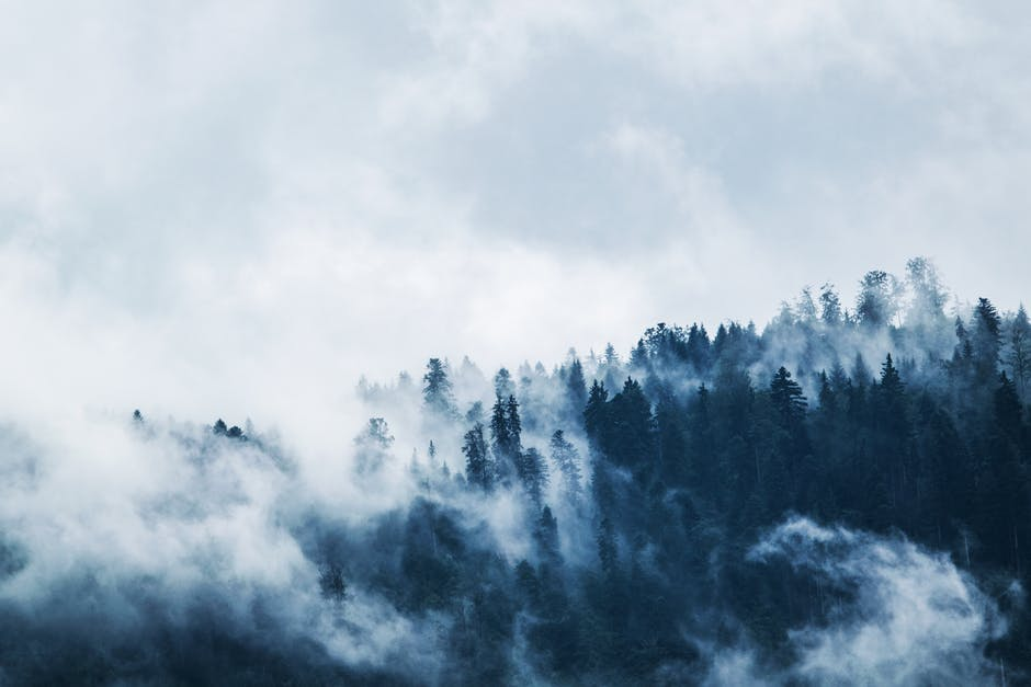 Green Pine Trees Covered With Fogs Under White Sky during Daytime