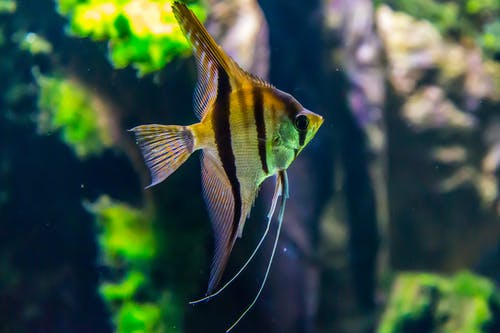 Macro Shot Photography of Yellow and Black Fish