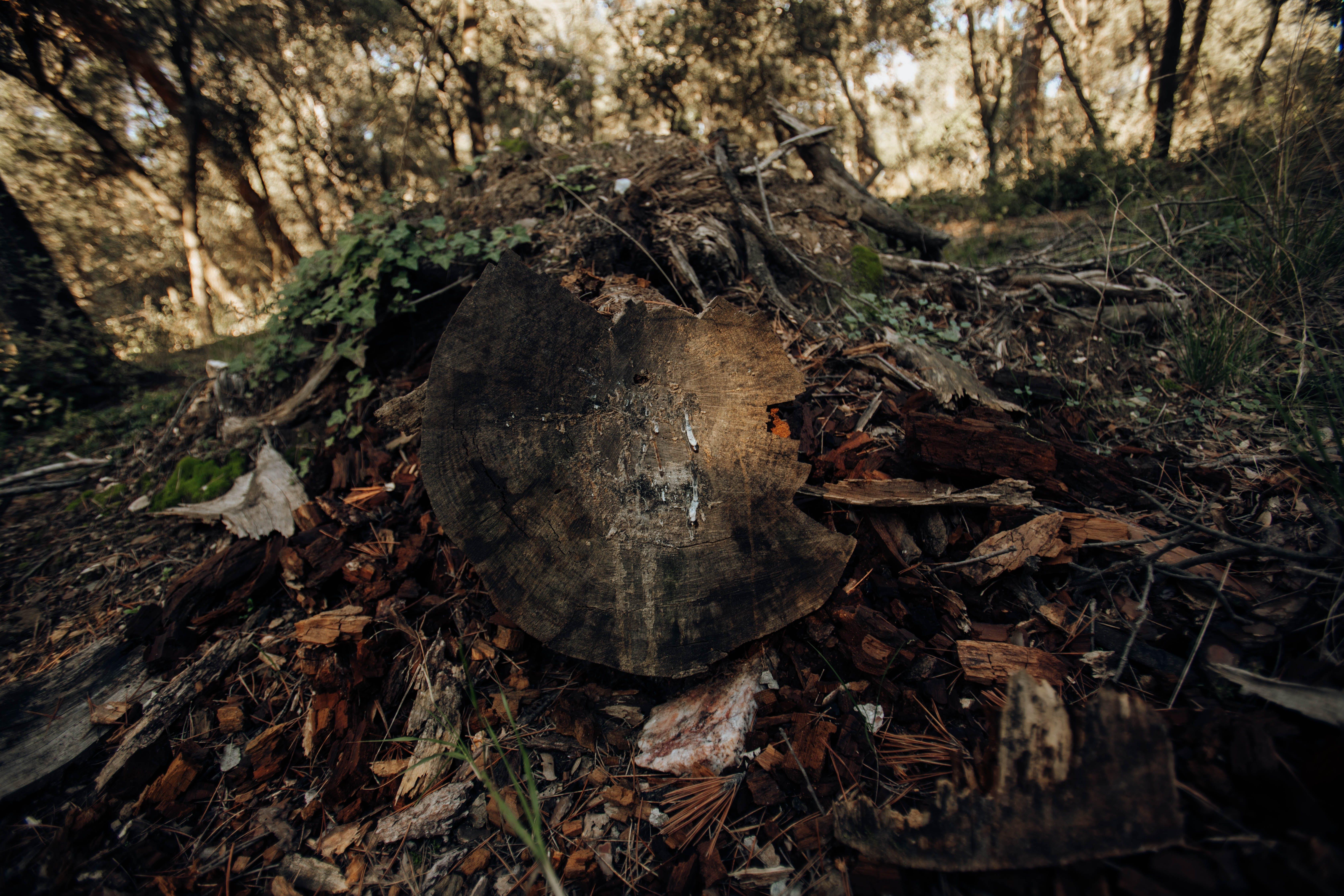 Gratis lagerfoto af græs, hakket træ, land, træ