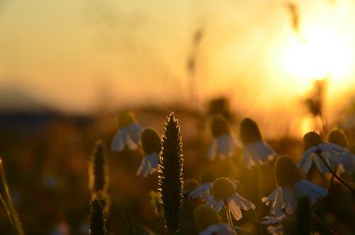 Gratis lagerfoto af blomster solhvide natur