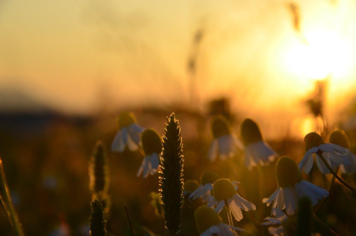 flores sol blanco naturaleza