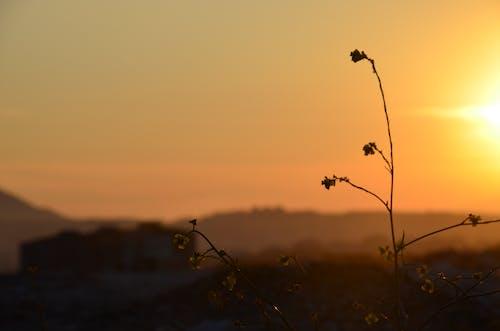 Fotos de stock gratuitas de ã§iã§ek, sol amarillo
