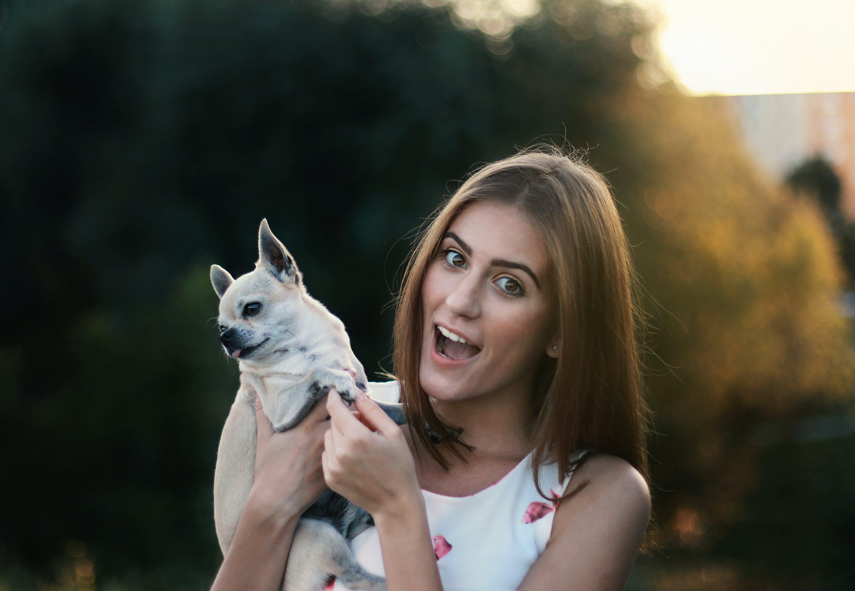 Free stock photo of animal lover, beautiful girl, blurred background, dog