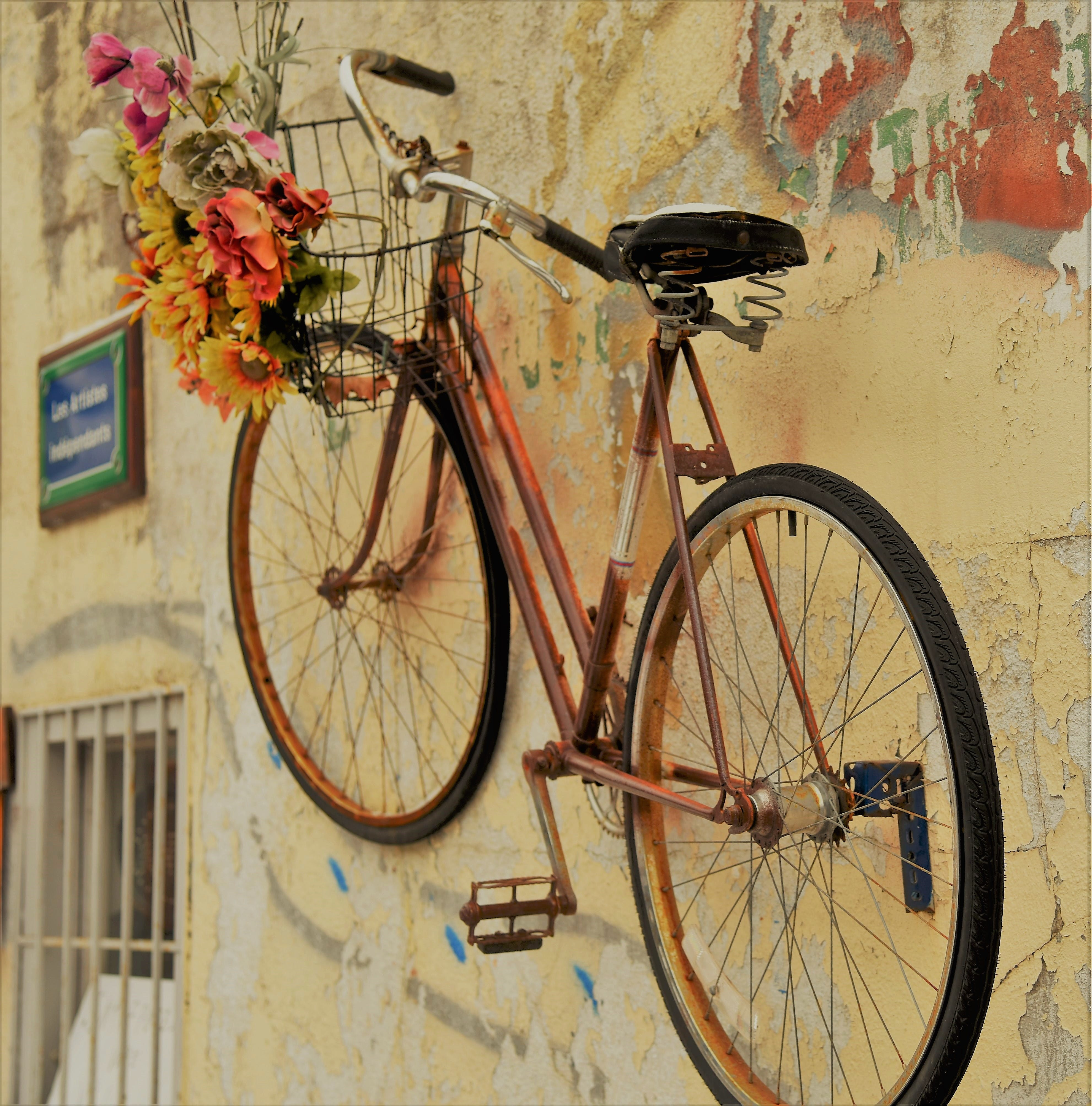 Free stock photo of bicycle, building, flower, wall