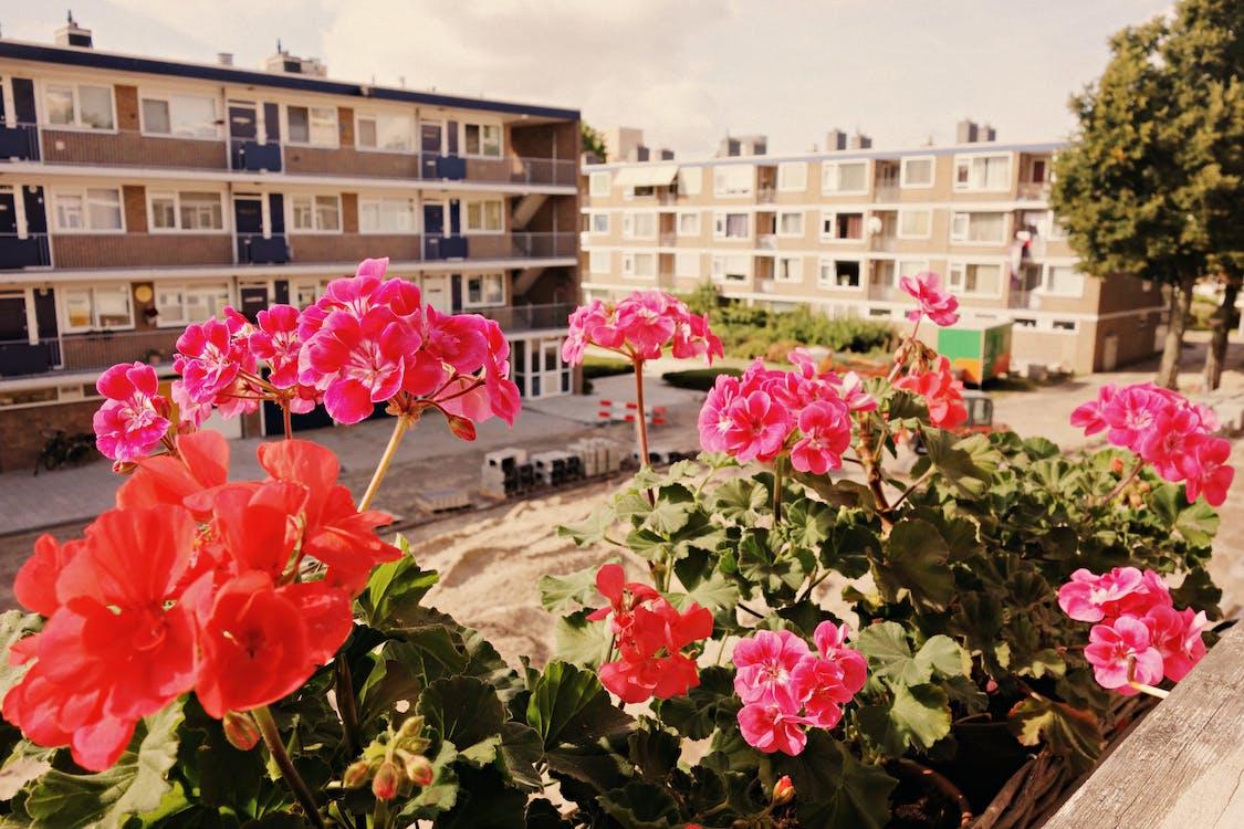 block, flowers, geranium