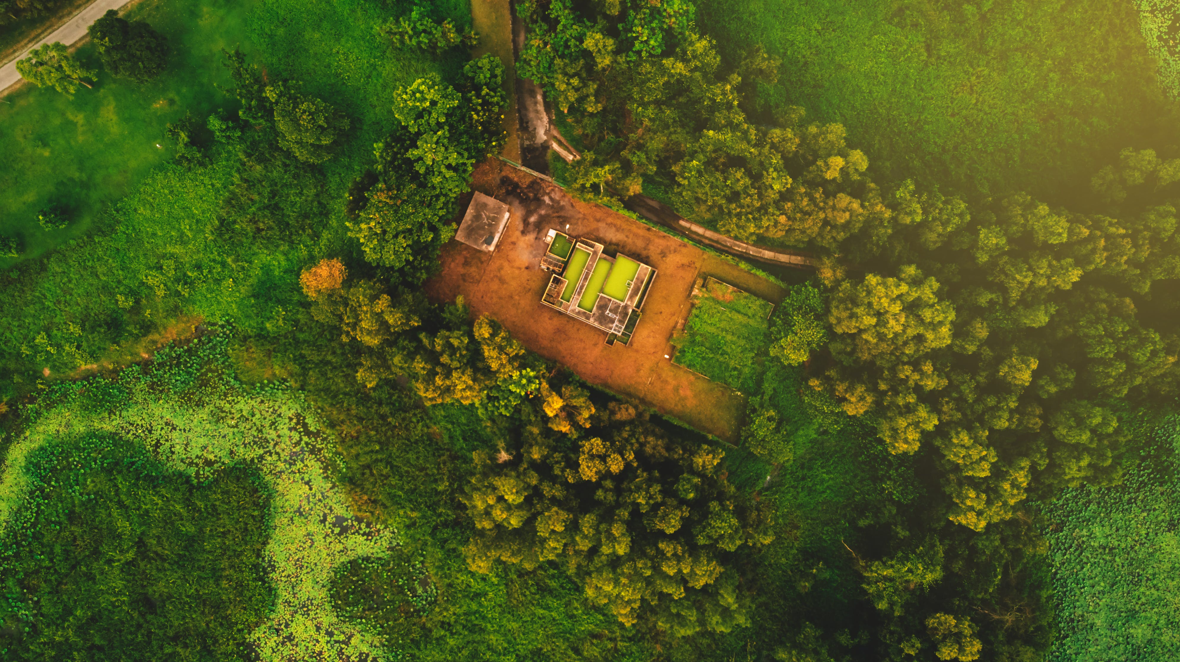 Kostenloses Stock Foto zu bäume, drohne cam, drohne erschossen, drohnenfotografie