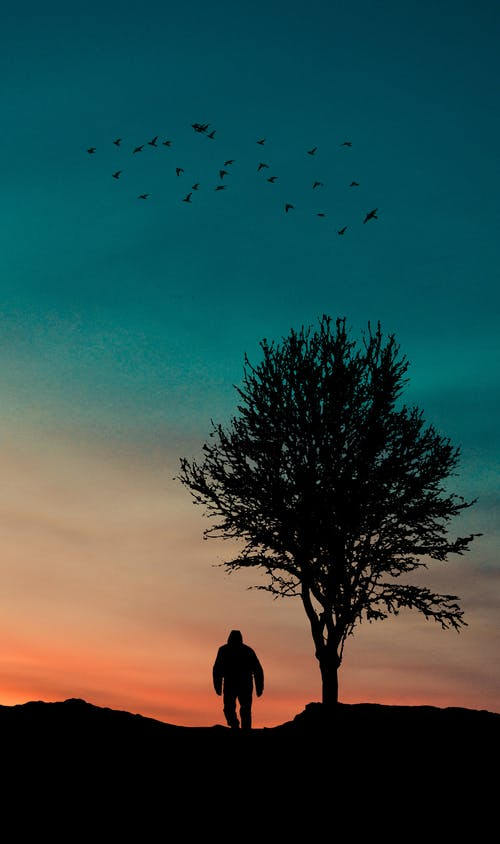 Free stock photo of hill, sunset, tree silhouette