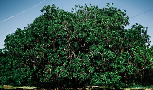 Foto d'estoc gratuïta de arbre, bellesa a la natura, branca d'arbre, branques